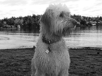 Olivia on Cadboro Bay Beach, Saanich BC